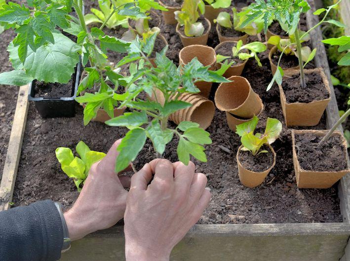 Sol, agua, contenedor, sustrato y plantones serán los elementos necesario para nuestro Huerto.0.