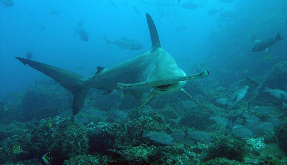 Las especies migratorias engloban animales marinos, terrestres y aves. @Matt Potenski