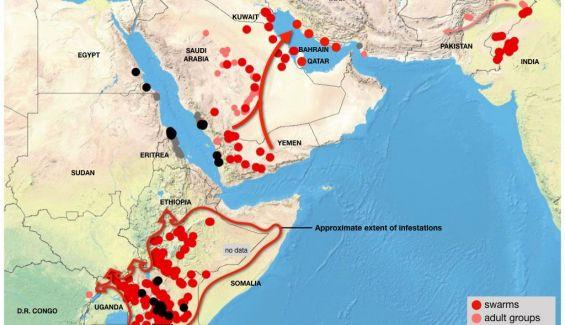 Situación actual de la plaga de langosta. Fuente: FAO