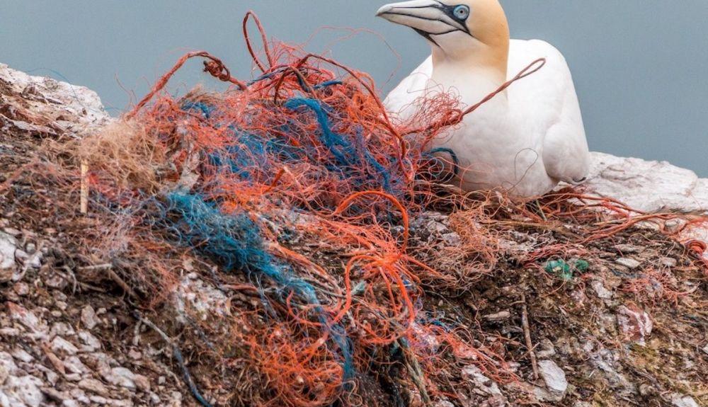 Nuestras basuras en los océanos causan millones de muertes entre los animales.